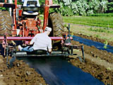Roy Shaw laying Lumite Weed Barrier at the Colorado State Forest Service Nursery